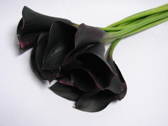 Cala Lillies Black / Lilium