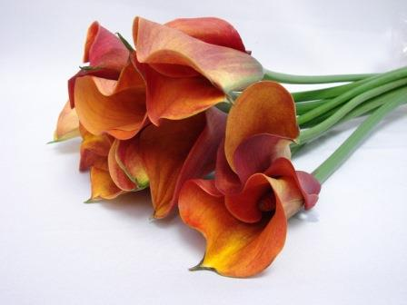 Cala Lillies Orange / Arums / Zantedeschia
