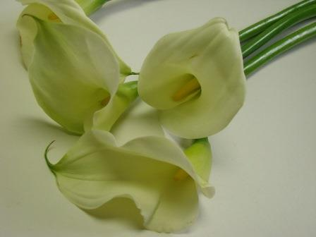 Cala Lillies White / Arums / Zantedeschia