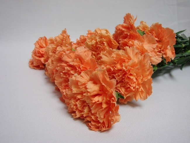 Carnations Orange / Dianthus