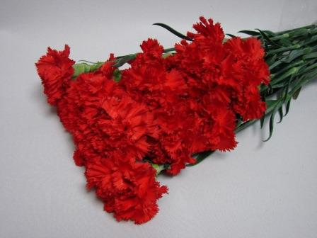 Carnations Red / Dianthus