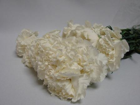 Carnations White / Dianthus