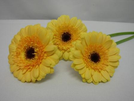 Gerbera Double Light Yellow with Black Eye / Barberton Daisy