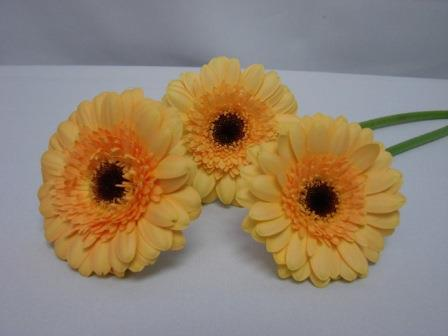 Gerbera Double Peach with Black Eye / Barberton Daisy