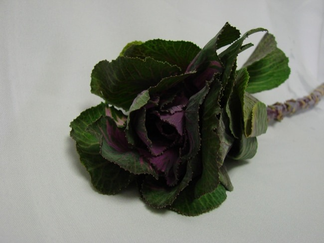 Kale Green with Purple / Brassica