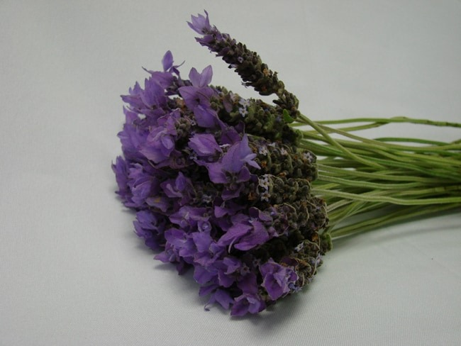 Lavender / English Lavandula