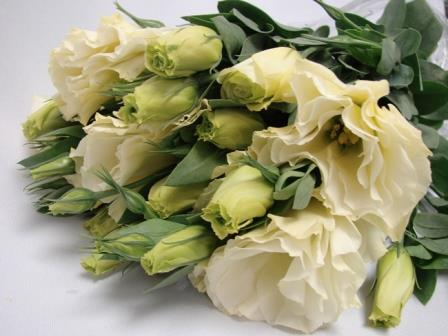 Lisianthus Cream / Eustoma / Jodels