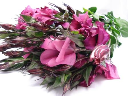Lisianthus Dark Pink / Eustoma / Jodels