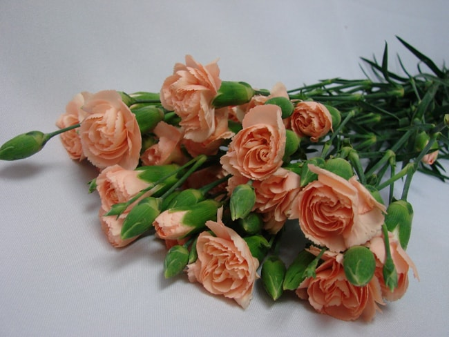 Mini Carnations Peach