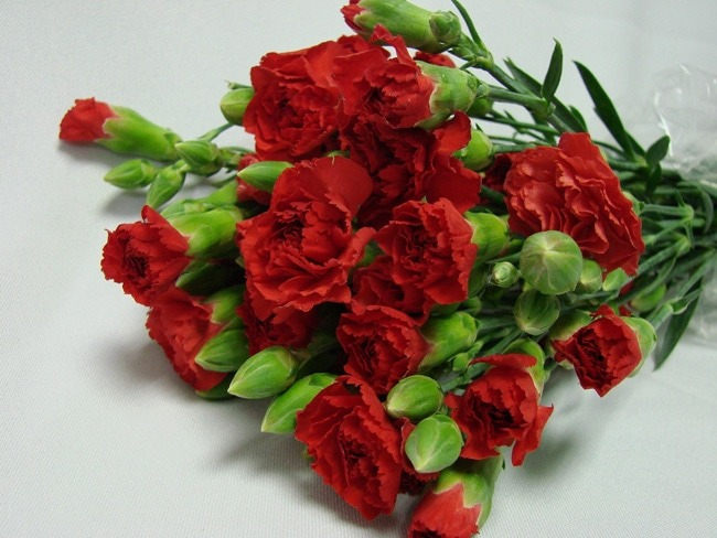 Mini Carnations Red