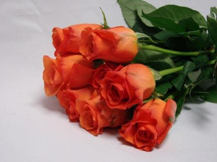 Roses Burnt Orange / Spudnick