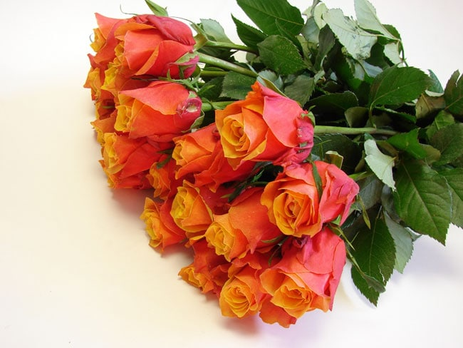 Roses Two Tone Orange / Cherry Brandy