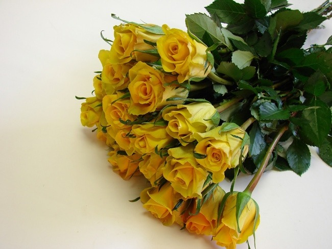 Roses Yellow / Gold Strike