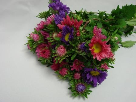 Somer Asters / Rainbow Asters